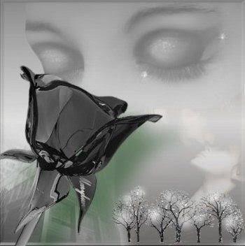 http://4.bp.blogspot.com/_ResmQ7XGPdE/SUk0J109kQI/AAAAAAAADx0/2d-L8p3lKYI/s400/rosto_rosa_negra.jpg