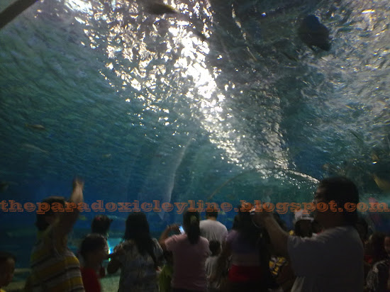 Tunnel aquarium in Manila Ocean Park