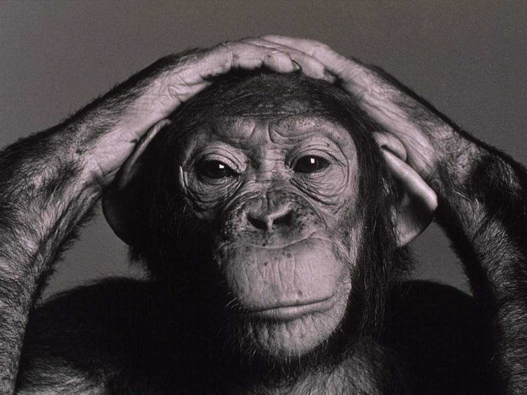 http://4.bp.blogspot.com/_Rj0JmF314Kg/TL21qs3bjzI/AAAAAAAABkY/Gdtm0EGpcoo/s1600/chimpa.jpg