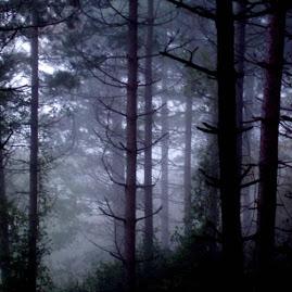 belleza de los bosques