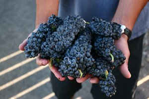 Petite Sirah - Go Big or go home.
