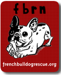 Adopt a Frenchie at FBRN
