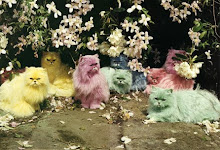Pastel Kitties Tim Walker