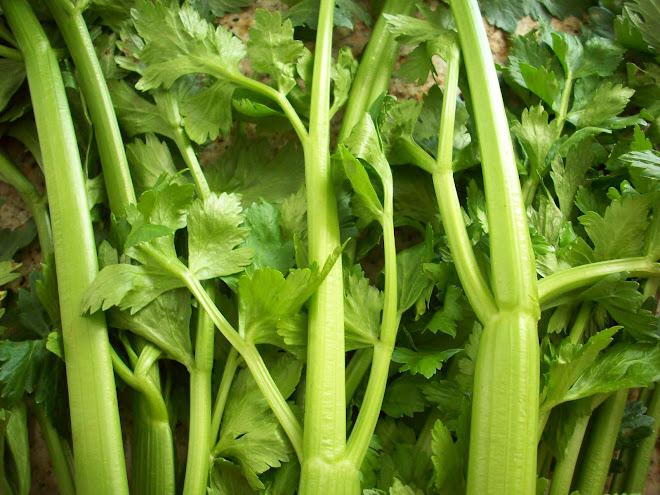 SLO Celery