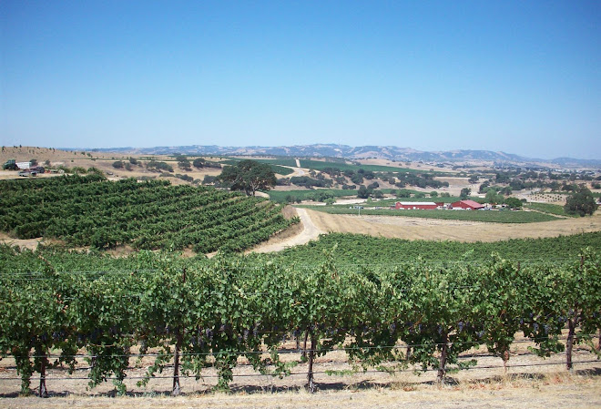 getting close to harvest time at Penman Springs Vineyard, paso robles