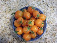 Fragrant SLO Tomatoes