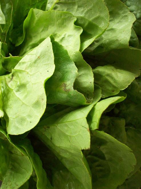SLO Organic Lettuce