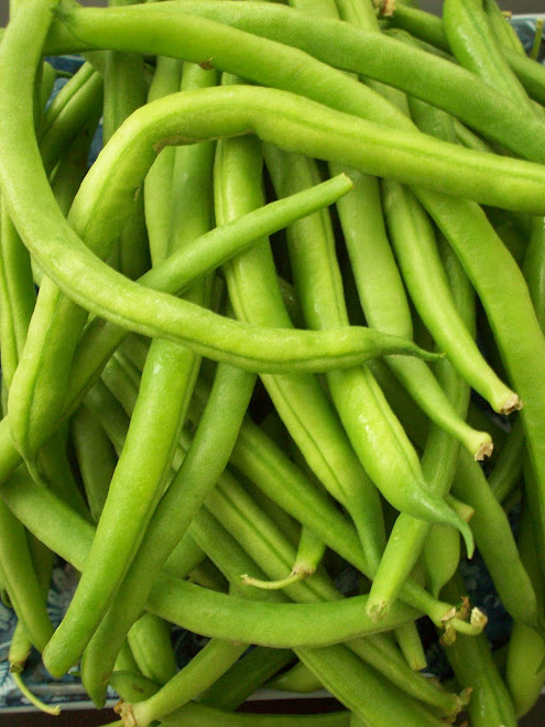SLO Green Beans