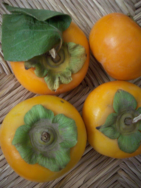 SLO Fuyu Persimmons