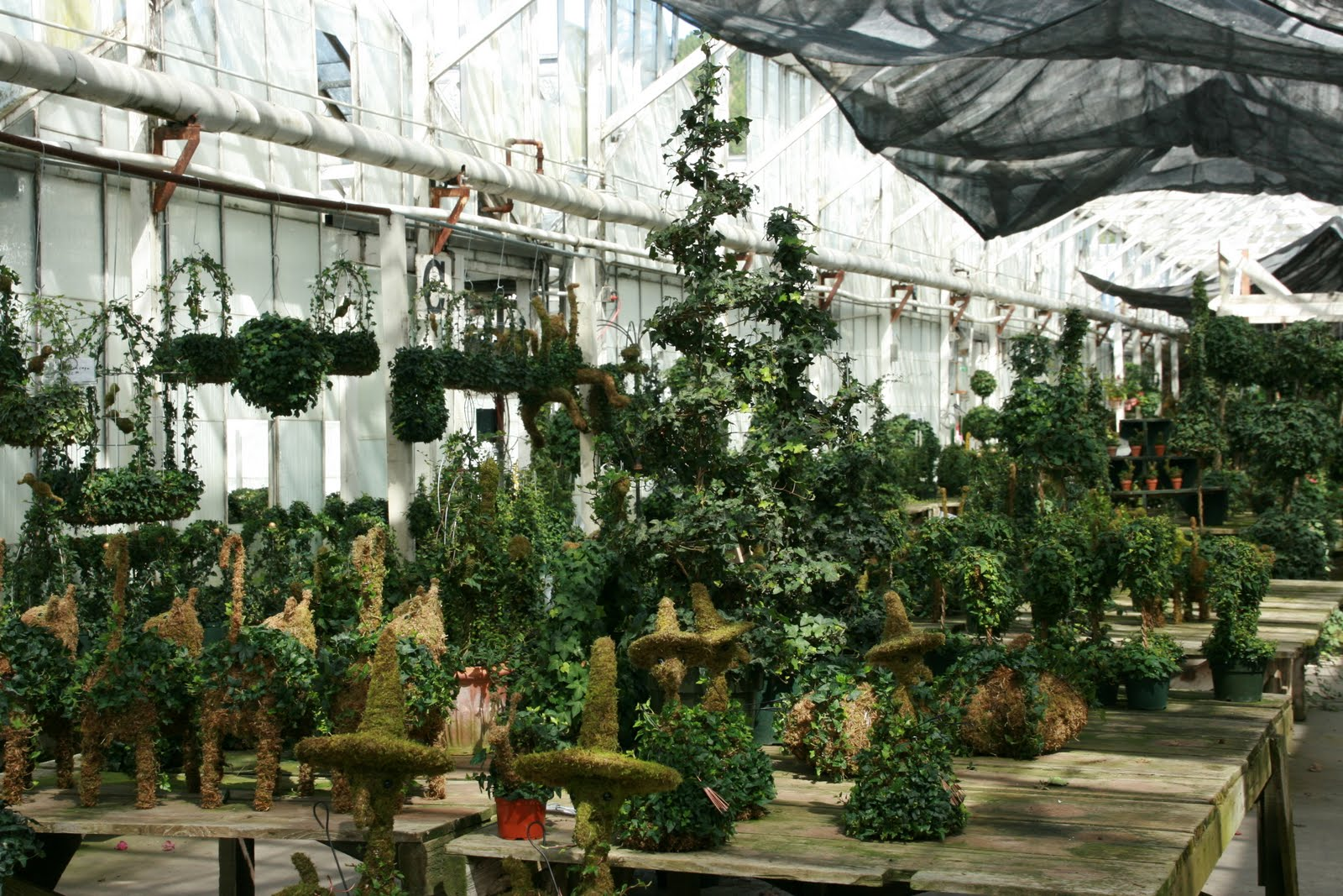 Live Topiary Part - 21: Accessorizing With Ivy Topiaries