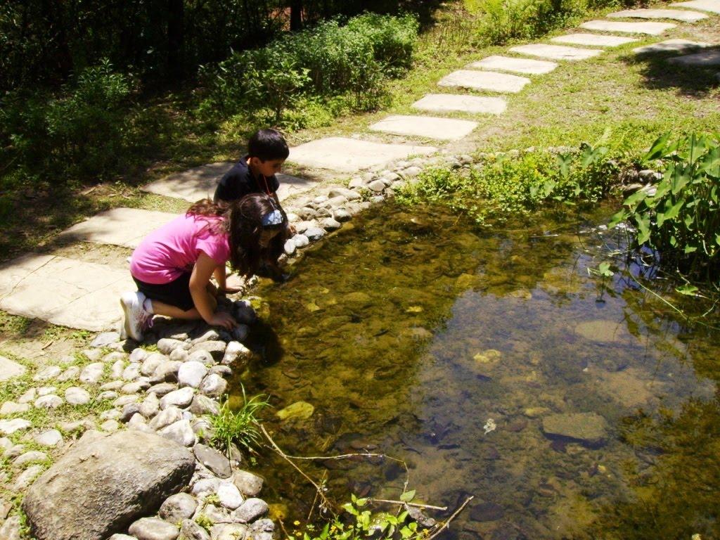Vida silvestre en nuevo le n plantas acu ticas de nuevo le n for Plantas de estanque