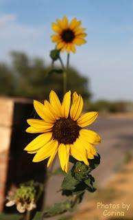 Yellow Flowers in Sunshine