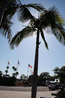 Palm Tree at Santa Barbara, CA airport