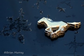 Frosty Mustang 5.0