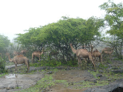 Salalah