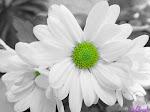 Minha flor favorita!