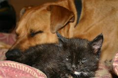 Cuddly Samson and Buzz