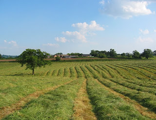 Freshly-mown hayfield in UK