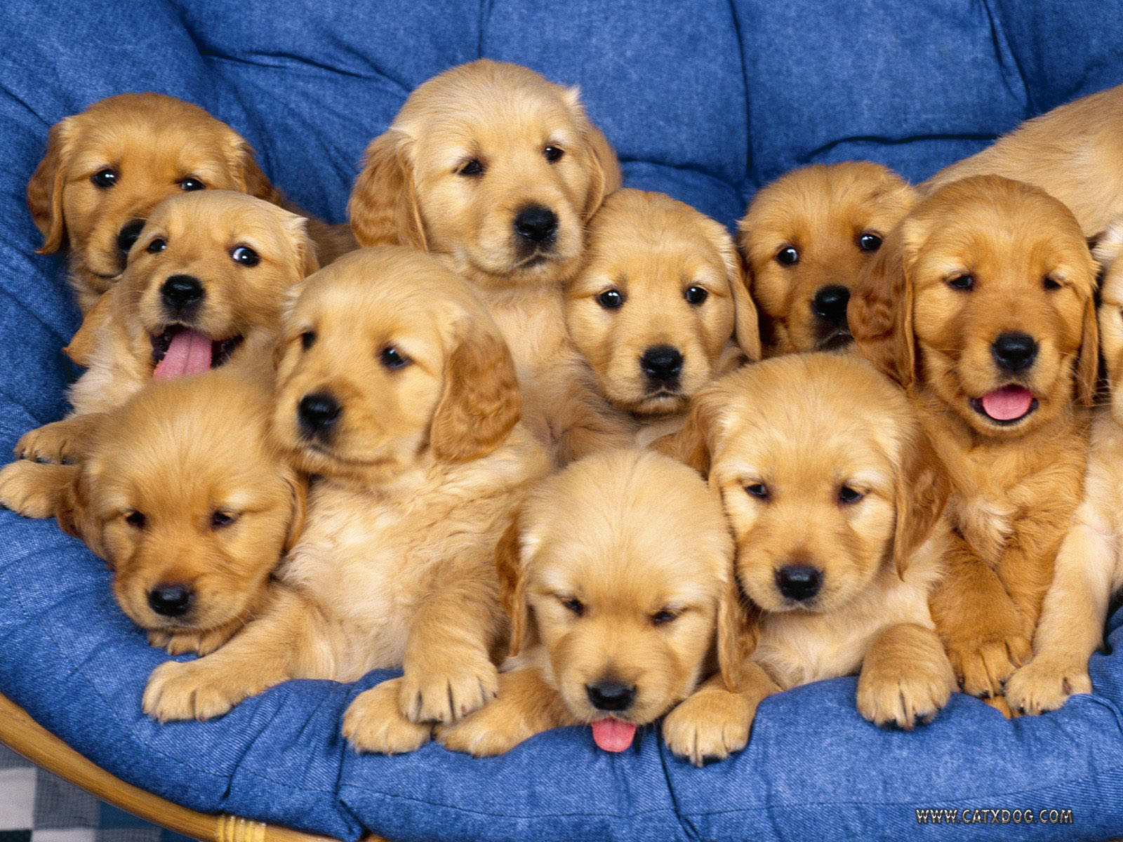 moreha tekor akhe Really Cute Puppies And Dogs