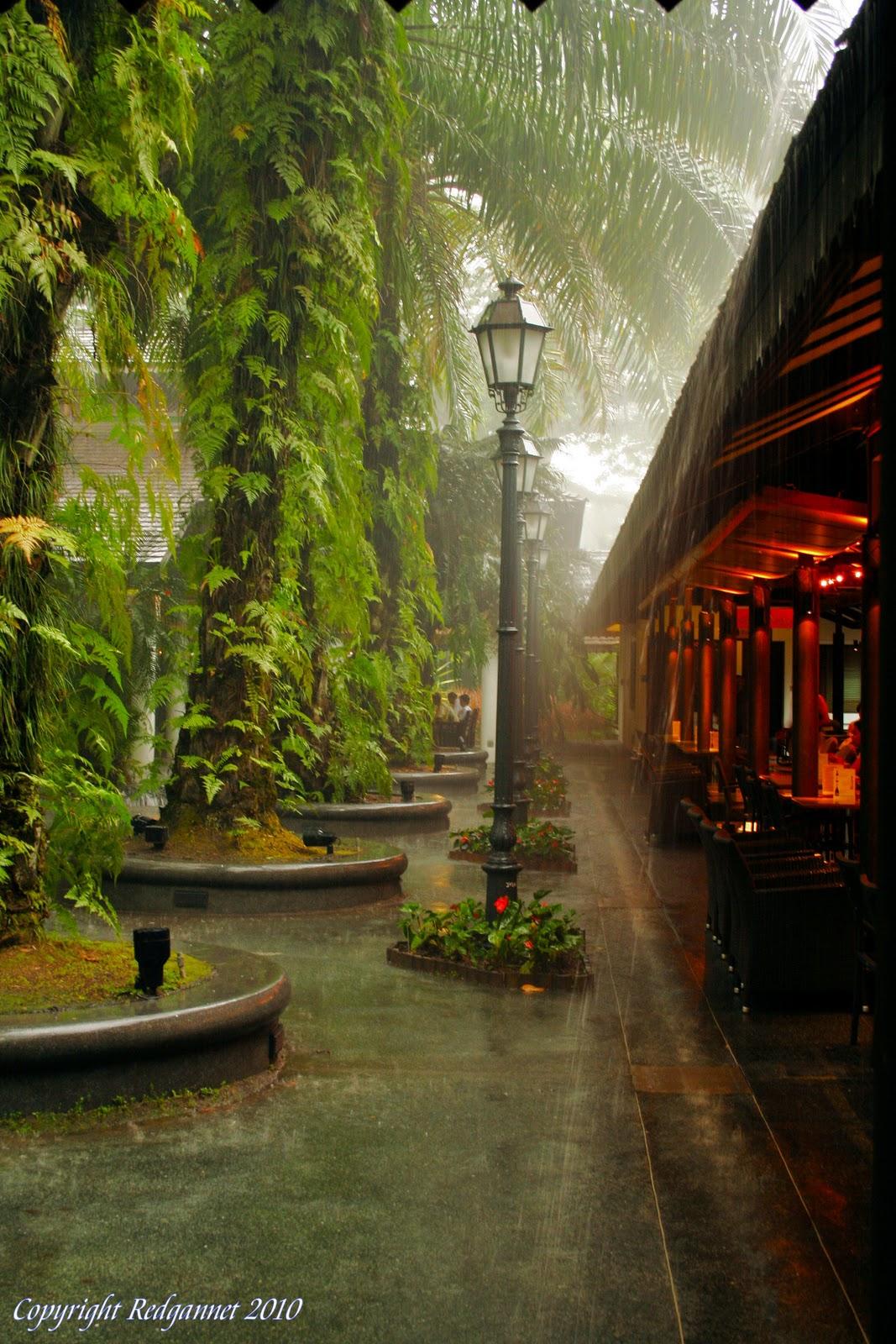 Redgannet: Singapore. Botanical Gardens, Paser Ris, Central ...