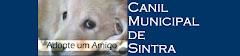 Canil Municipal de Sintra/ Cães