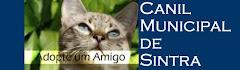 Canil Municipal de Sintra/ Gatos