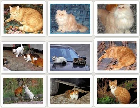 wallpaper kucing comel. wallpaper kucing comel. Wallpaper kucing comel; Wallpaper kucing comel