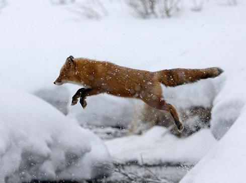 Lambang Mozilla Firefox9