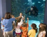 NC Aquarium diver