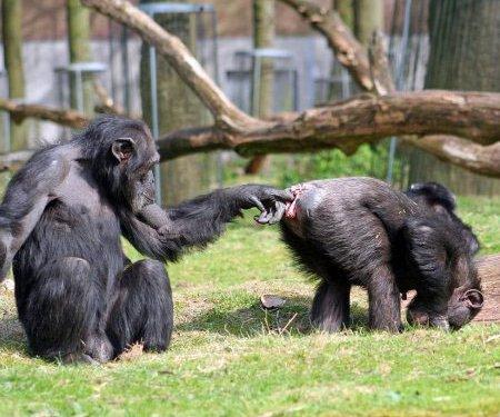 El mono que intenta tener sexo con un ciervo - ABCes