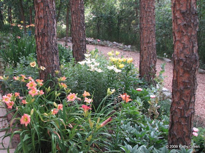 Gardens like these are packed with perennials, groundcovers and herbs, so no room for weeds