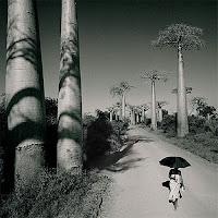 Allée des Baobabs Chris Simpson