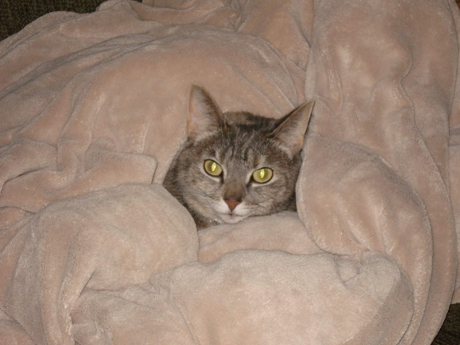 [Mia+in+blanket]