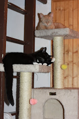 Kitties on their perches