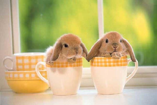 Bunny Friday Returns!