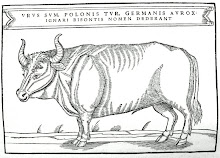 """I am 'urus', tur in Polish, aurox in German;dunces call me bison"