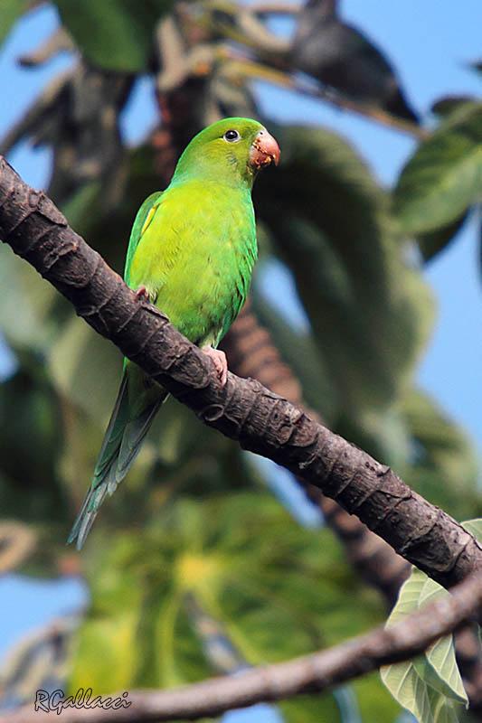 112 fotos jardim botanico jundiaiFotos Jardim Botânico, Jundiaí