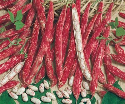 Amapbdm dans votre panier du mardi 15 septembre - Cuisiner haricot rouge ...