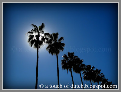 Palm trees outside of a shopping center in southern California  © atouchofdutch.blogspot.com