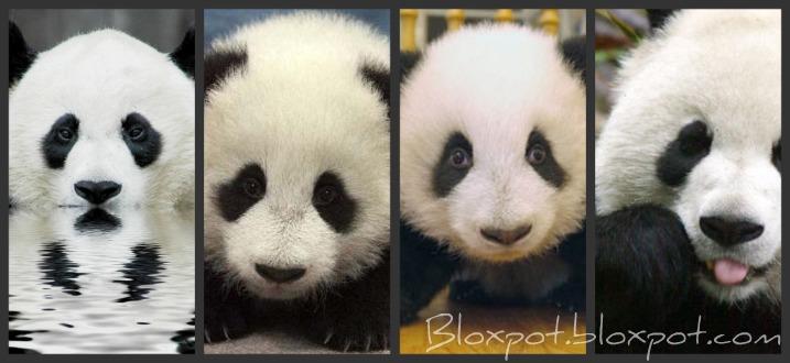 Bloxpot.bloxpot.com