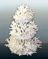тема корали