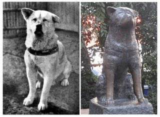 O verdadeiro Hachiko e sua escultura em bronze