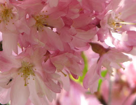 """#5 Flickr """"Blossom"""""""