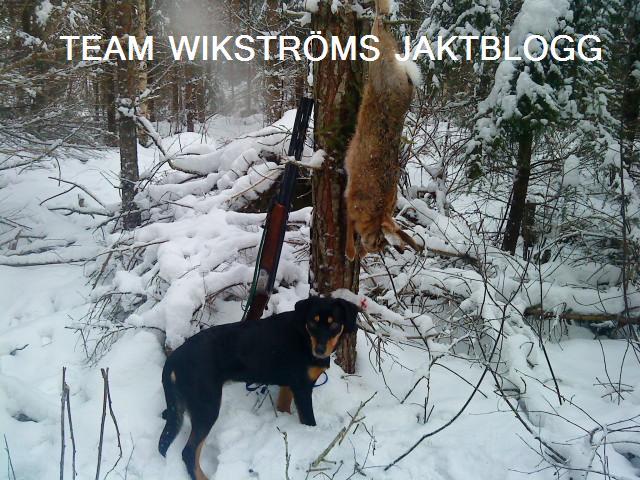 team wikströms jaktblogg