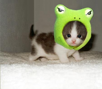 baby_animals_73.jpg