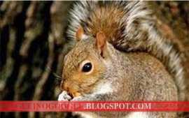 esquilo, rouba, interior