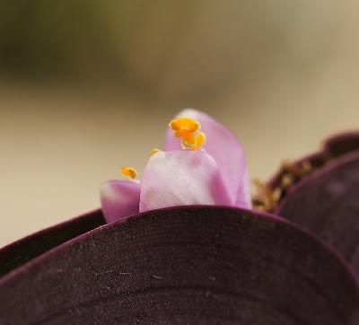 Flowers frech