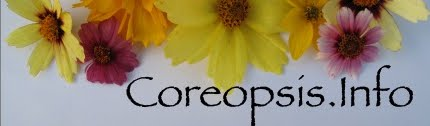 Coreopsis Pictures and Information