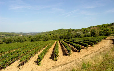 Cava Vineyards of the Penedes - Barcelona Sights