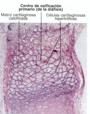 Tecnología Médica Mención Morfofisiopatología y Citodiagnóstico ...